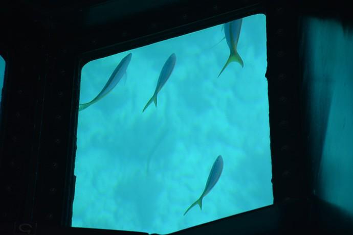 Schools of fish swim by below