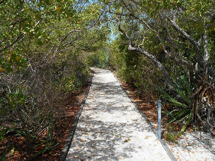 One of the well-maintained trails on Indian Key