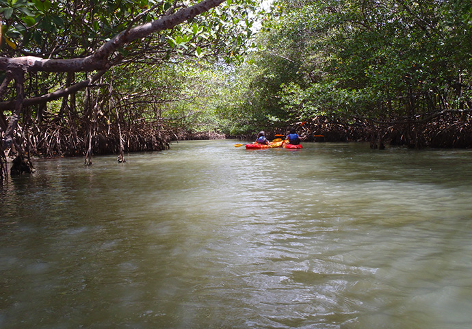 In one of the mangrove-lined waterways