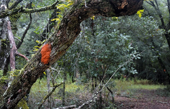 Walking beneath the oaks