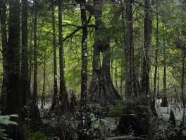 Florida Trail, Cypress Lakes Preserve