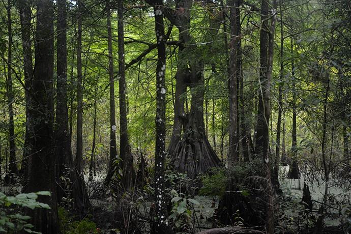 The Keyhole Cypress.