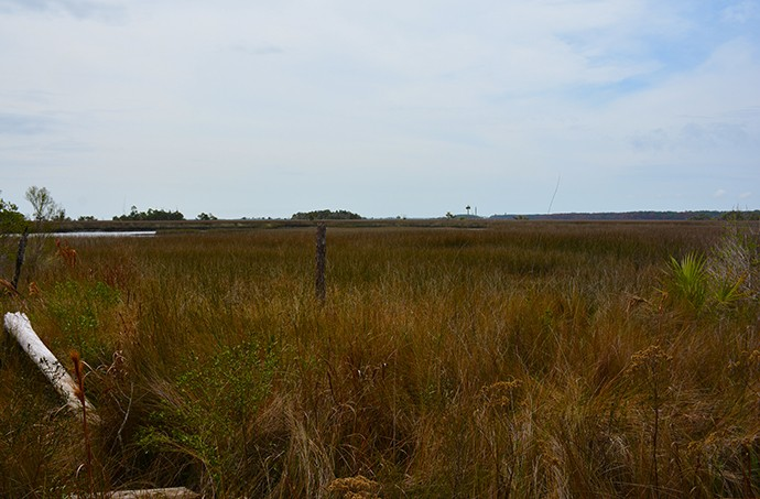 Marsh Point