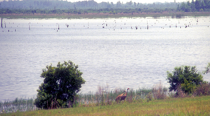 Taylor Creek Reservoir