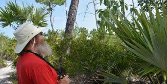 John looking at a manchineel tree