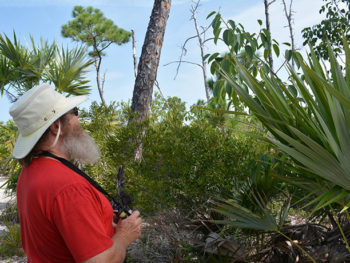 John looking at a manchineel tree