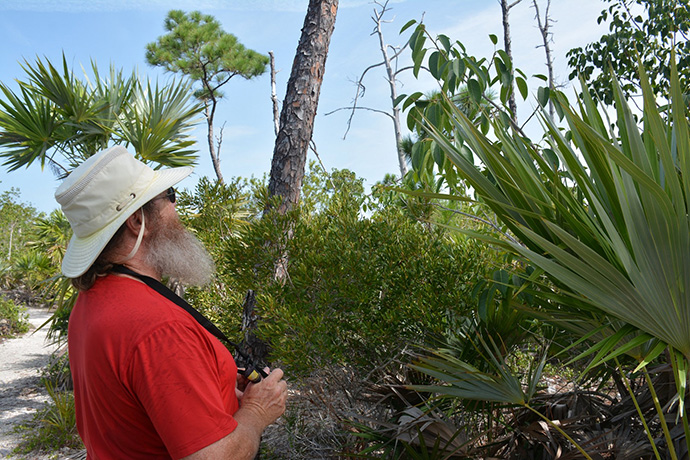 Part Ii More Fruit Of Poisonous Tree >> Poisonous Trees In Florida Florida Hikes