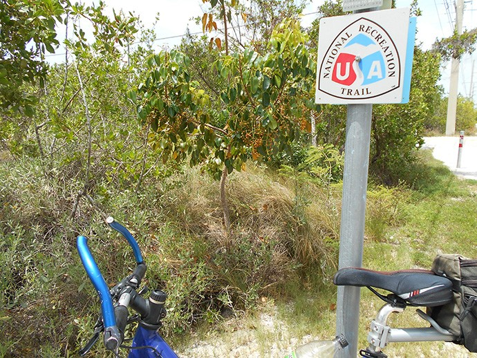 Poisonwood along Overseas Heritage Trail