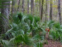 Marshall Swamp on the Cross Florida Greenway