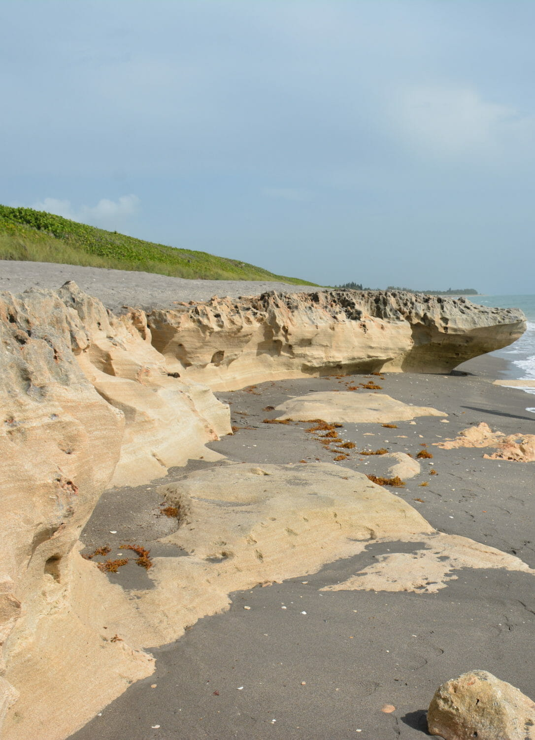 One of the most dramatic shorelines in Florida, the rocky shore of Blowing Rocks Preserve has sea caves and bluffs to explore on a hike through the oceanfront preserve.