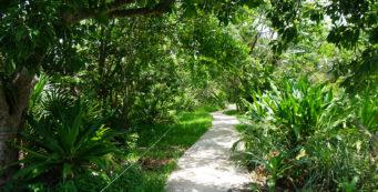 Indigenous Park