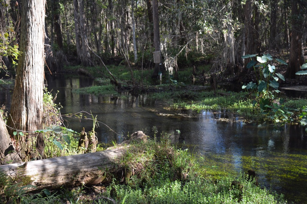Shingle Creek