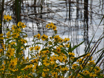 Floral bounty on the river's edge
