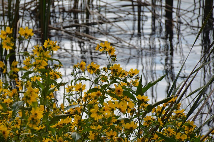Floral bounty on the rivers edge