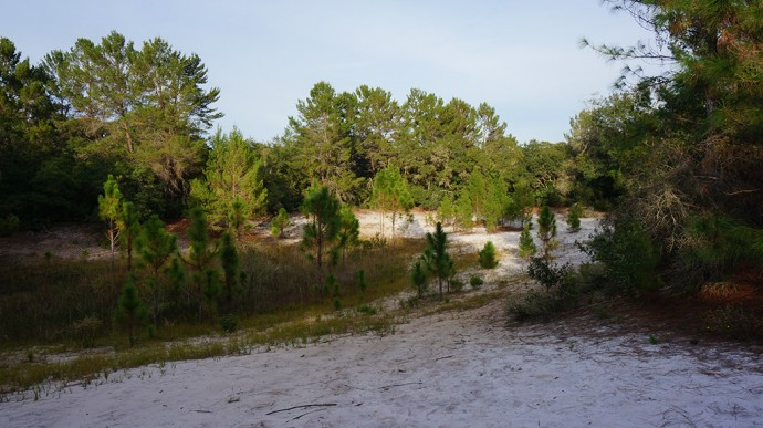 Bowl of vegetation between the sandy ridges