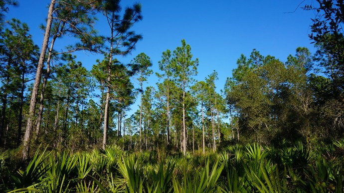 Palm Bluff Conservation Area
