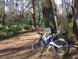 Mountain biking and the Florida Trail