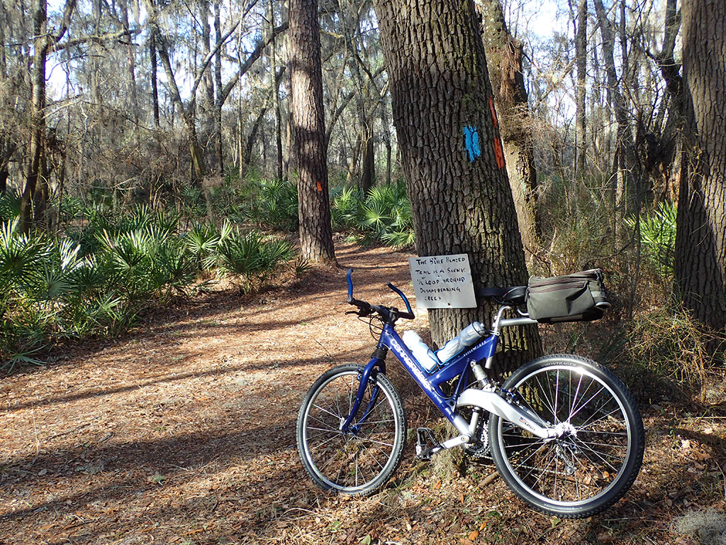 Trail junction with bike
