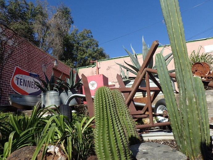 Cacti and cars