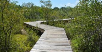 little hamaca park castellow hammock preserve   florida hikes   rh   floridahikes