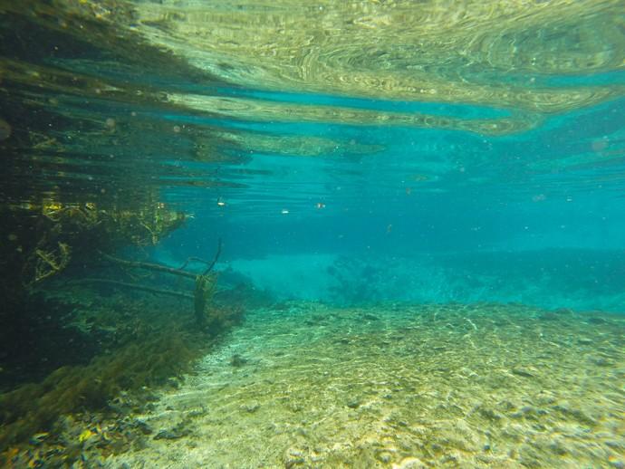 Ichetucknee Spring algae