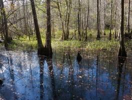 Florida Trail, New River to Hampton