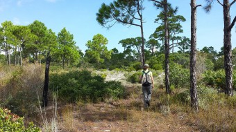 Little St. George Island Trails