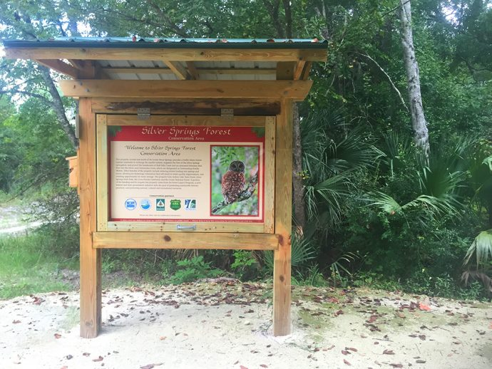 Silver Springs Forest