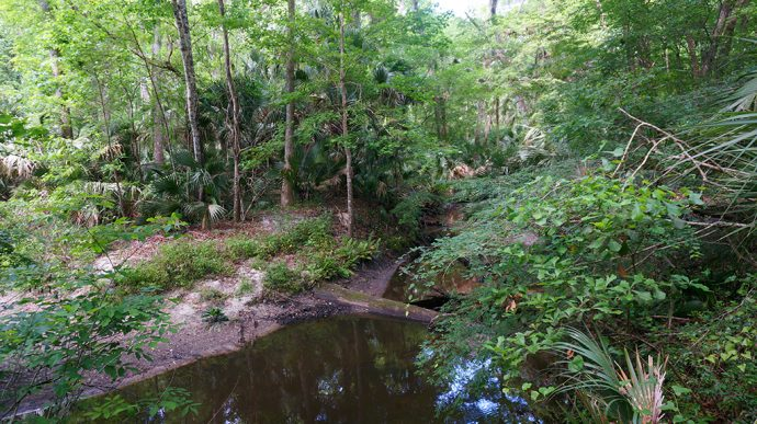 Soldier's Creek in Spring Hammock Preserve