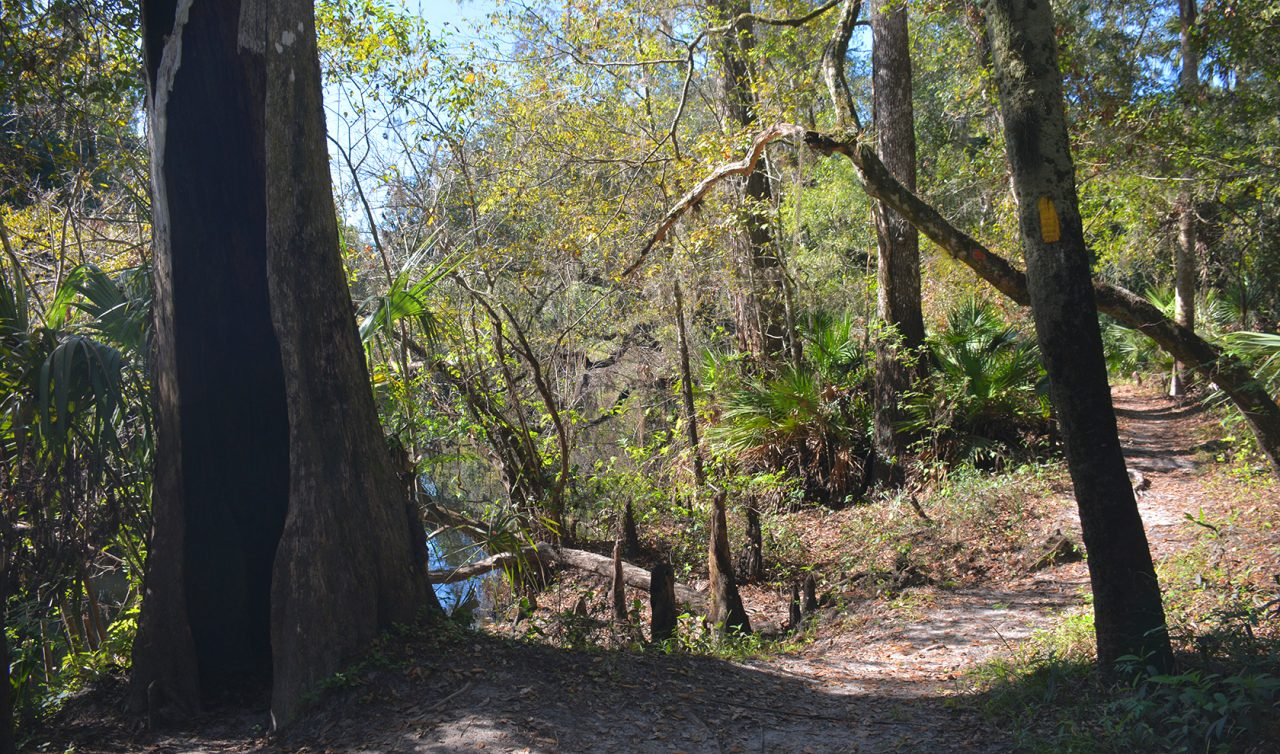 Seminole Woods Trail