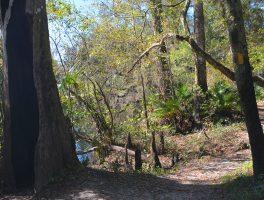 Seminole Woods Trail