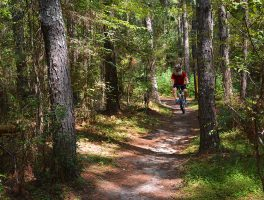 Riding the Pine Tree Trail at Santos