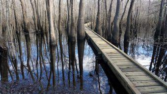 Cypress Creek boardwalk