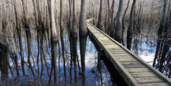 Choctawhatchee River Section of the Florida Trail opens
