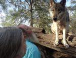 Seacrest wolf preserve