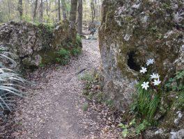 Boulders and blossoms at Florida Caverns