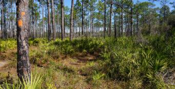 Florida Trail, Sopchoppy