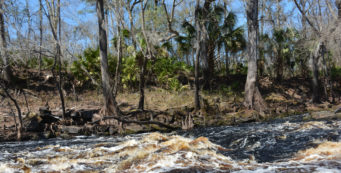 Florida Trail, Aucilla River
