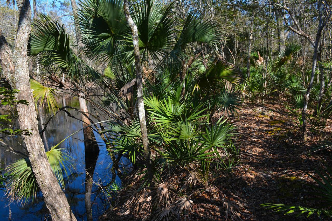 Florida Trail Aucilla River
