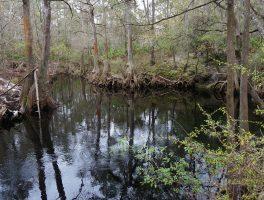 Florida Trail, Sopchoppy River