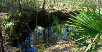 Florida Trail, Aucilla Sinks