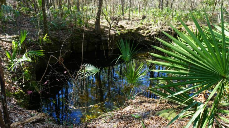 Florida Trail, Aucilla Sinks