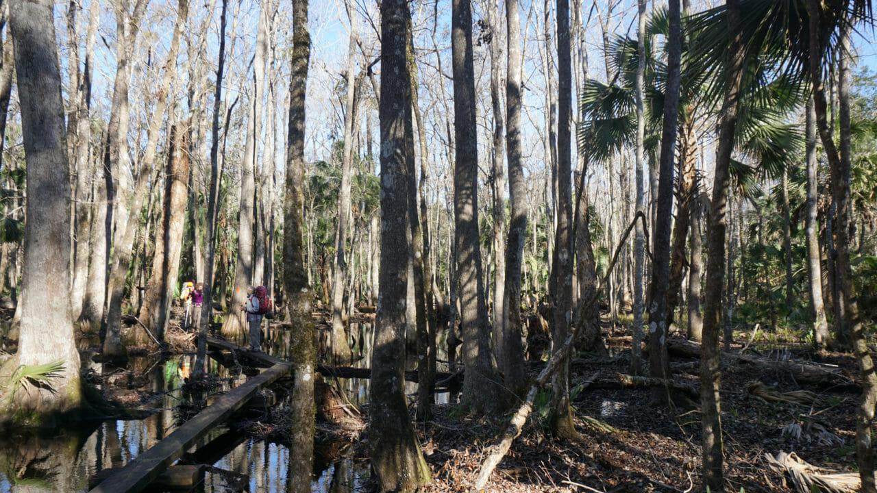 Florida Trail Aucilla River floodplain