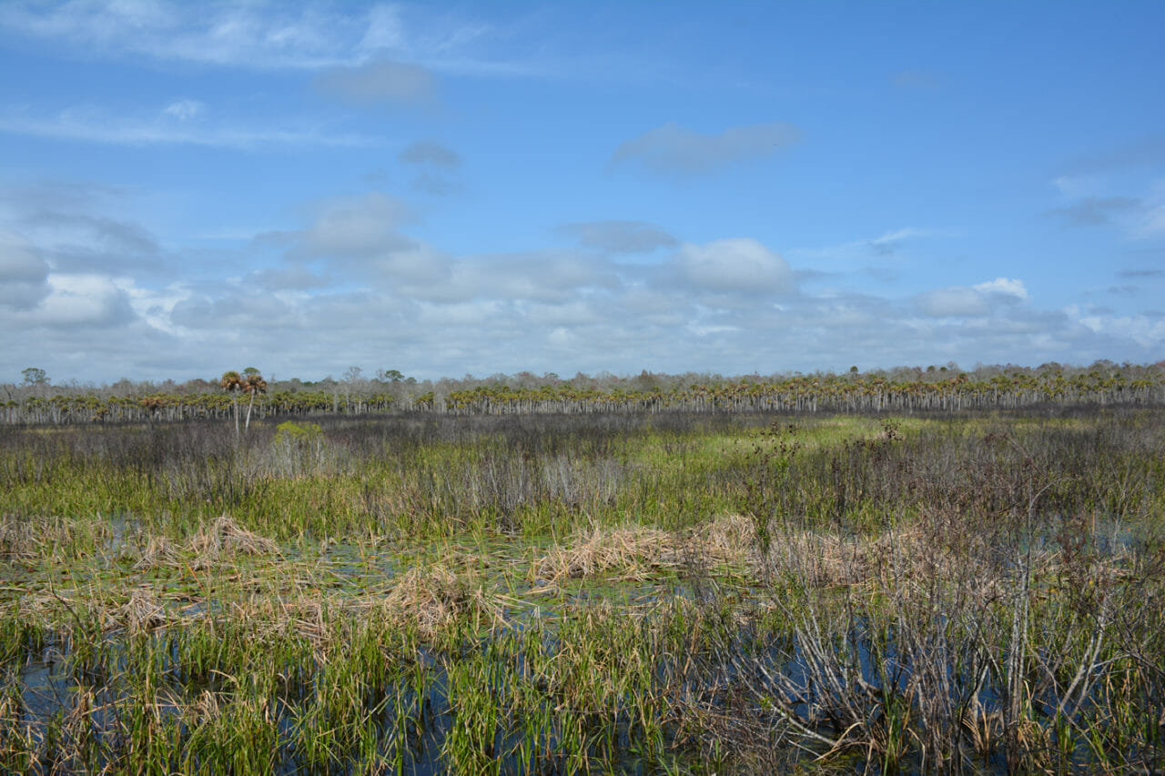 St. marks NWR panorama