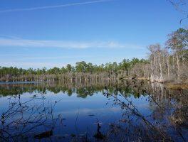 Florida Trail, Vilas to Camel Lake