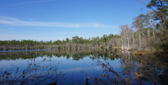 Florida Trail, Vilas to Camel Lake