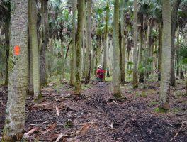 Florida Trail, Shepherd Spring
