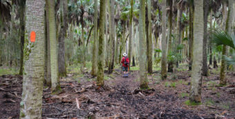 Florida Trail, Shepherd Spring
