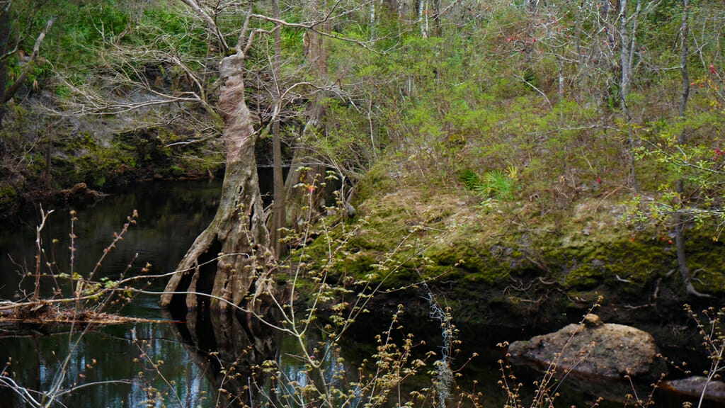 Sopchoppy River, Apalachicola National Forest