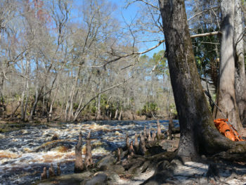Florida Trail Aucilla River